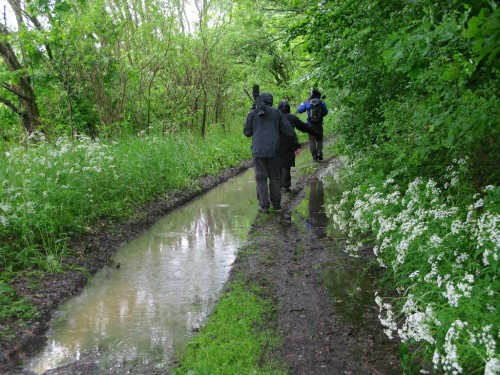 Birding while avoiding the rising flood waters - one of the best days of the trip, for all that
